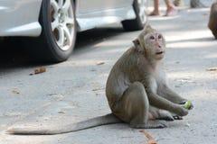 Fütterung Affen Lizenzfreie Stockbilder