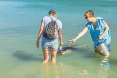 Fütterung der Delphine des Affen Mia Lizenzfreie Stockbilder