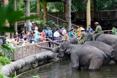Fütterung der Elefanten Lizenzfreie Stockfotografie