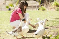 Fütterung der Enten Stockbild