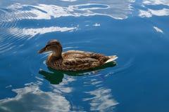Fütterung der Enten auf dem Wasser Lizenzfreies Stockfoto