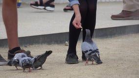 Fütterung der Tauben am Park Guell in Barcelona stock video footage
