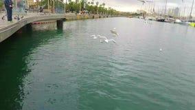 Fütterung der Vögel auf dem Ufer stock footage