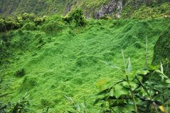 Fütterung einer Schildkröte in Vanillenaturpark-Mauritius-Insel stockbild