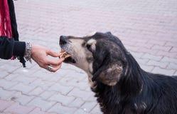 Fütterung eines Straßenhundes Stockfotografie