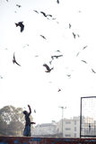 Fütterungsadler des Mannes in Delhi Lizenzfreies Stockbild