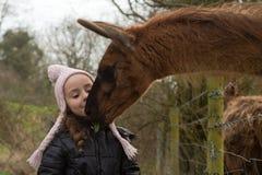 Fütterungsblatt des jungen Mädchens zum Lama vom Mund Lizenzfreie Stockfotografie