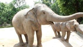 Fütterungselefanten der Leute stock video footage