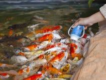 Fütterungsfische stockbilder
