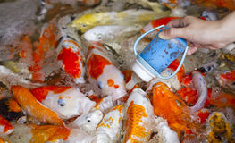 Fütterungsfische lizenzfreie stockfotografie