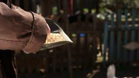 Fütterungshühner der Frau stock footage