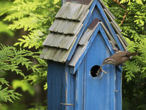 Fütterungsjunge des Vogels im Nistkasten Lizenzfreies Stockfoto
