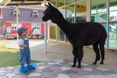 Fütterungskarotte des asiatischen netten Babys für großes schwarzes Alpaka lizenzfreies stockfoto