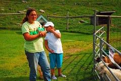 Fütterungslämmer auf einem Bauernhof lizenzfreies stockfoto