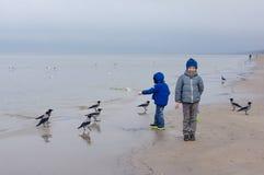 Fütterungsmöven des Jungen auf dem Strand Kleiner Junge steht auf Strand das Meer am kalten windigen Tag lizenzfreie stockfotografie