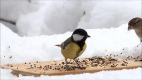 Fütterungsplatz für wilde Vögel stock video footage