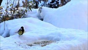 Fütterungsplatz für wilde Vögel im Schnee stock video