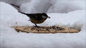 Fütterungsplatz für wilde Vögel im Winter stock footage