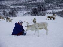 Fütterungsren Sami-Leute lizenzfreie stockbilder