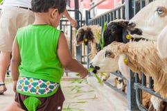 Fütterungsschafe des Kinderjungen Stockfotos
