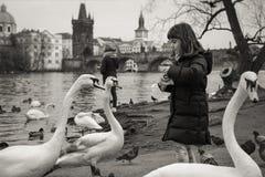 Fütterungsschwäne des Mädchens in Prag Lizenzfreie Stockfotografie