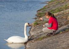 Fütterungsschwan des kleinen Mädchens Stockfoto
