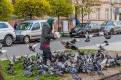 Fütterungstauben einer Frau in Krakau Polen stockfoto