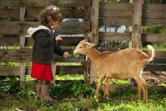 Fütterungsziege des kleinen Mädchens im Garten Lizenzfreie Stockfotos
