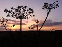 100f 2 8 28 301 ai照相机夜间f影片fujichrome nikon s夏天velvia 库存图片