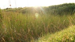 100f 2 8 28 301 ai照相机夜间f影片fujichrome nikon s夏天velvia 免版税库存图片