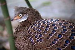 fågel Royaltyfria Foton