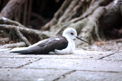 fågel Royaltyfria Bilder