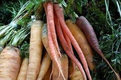 färgade morötter Arkivbild