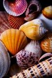 färgrika havsskal royaltyfria bilder
