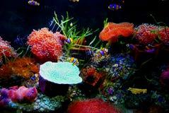 färgrikt akvarium royaltyfri illustrationer