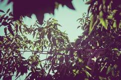 100f 2 8 28 för kameraafton f för 301 ai velvia för sommar för nikon s för fujichrome för film Fotografering för Bildbyråer