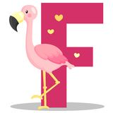 F for Flamingo stock illustration