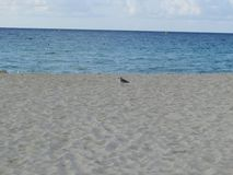 F?gel p? stranden arkivbild
