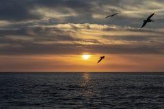 F?glar p? solnedg?ngen fotografering för bildbyråer
