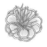 Flower vector illustration Stock Photo