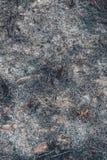 F?ljder som l?mnar brand efter brinnande gr?s royaltyfri bild