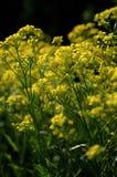 f?ltet blommar yellow arkivfoton