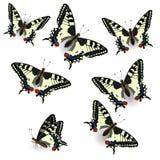 f?r fj?rilsfj?ril f?r bl? ask red f?r samling Realistisk swallowtail Vektorillustration av isolerat p? ren bakgrund Det kan anv?n vektor illustrationer