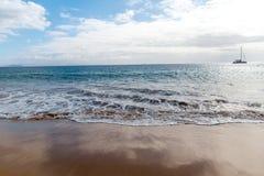 f?r kanarief?gellanzarote f?r strand tropiskt h?rligt hav panorama kanarief?glar arkivfoton