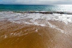 f?r kanarief?gellanzarote f?r strand tropiskt h?rligt hav panorama kanarief?glar arkivbilder