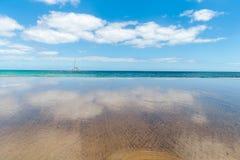 f?r kanarief?gellanzarote f?r strand tropiskt h?rligt hav panorama kanarief?glar royaltyfria foton
