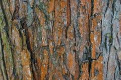 f?r poplartextur f?r sk?ll gammal tree mot bakgrund field bl?a oklarheter f?r gr?n vitt wispy natursky f?r gr?s colors naturligt royaltyfri foto