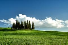 F?rbluffa det Tuscany landskapet Grönt gräs, blå himmel, cypressträd arkivfoton