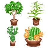 F?rgbild En samling av houseplants i krukor Crassula aloe vera, taggigt p?ron, Mammillaria ?lskv?rd hobby f?r samlare av royaltyfri illustrationer