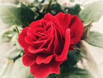 F?rgglad blomma med gr?n bakgrund royaltyfria bilder